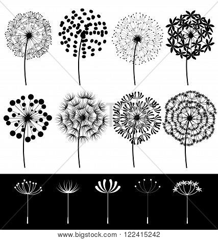 Beautiful dandelions set vector on white background