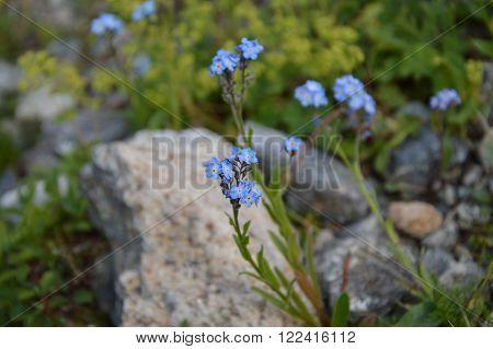 Mountain White Flowers