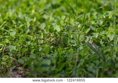 Plant green tree background surface natural color