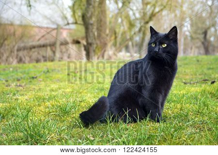 black cat sitting on a meadow in the countryside, copy space