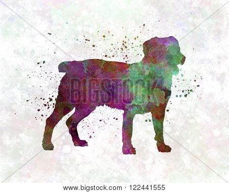 Appenzell Cattle Dog in artistic abstract watercolor background