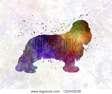 Cavalier King Charles Spaniel in artistic abstract watercolor background