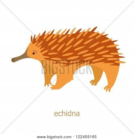 Echidna. Cartoon character. Australian endemic. Zoo illustration. The fauna of the Australian continent. Wild animal. Cute echidna. Symbol of country.