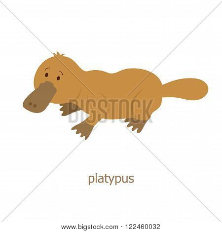 Platypus. Cartoon character. Australian endemic platypus. Zoo illustration. The fauna of the Australian continent. Wild animal. Cute duckbill. Symbol of country.