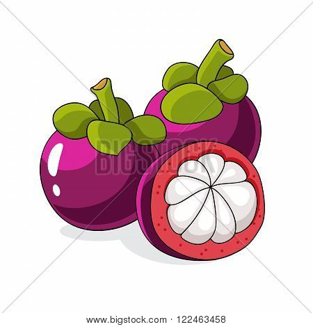 Tropical fruit mangosteen with sweet white flesh juicy segments inside and a thick reddish-brown skin. Vector illustration on white background.