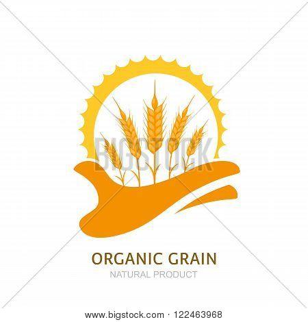 Human Hand Holding Wheat Ears And Sun.