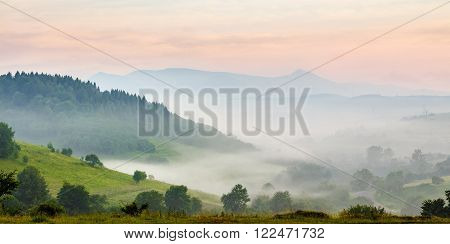 hillside of mountain rural area with coniferous forest and meadow in morning fog