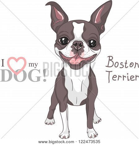 Vector Smiling dog Boston Terrier breed standing