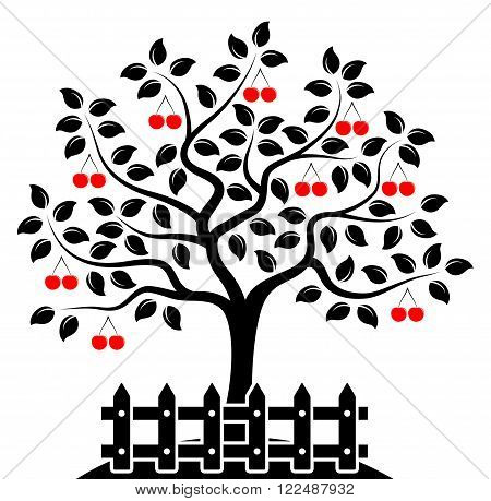 vector cherry tree behind picket fence isolated on white background