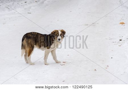 Cute young dog waiting for master on a winter street