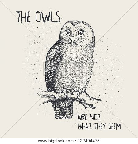 The owls are not what they seem, t-shirt design
