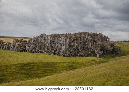 Landscape in the Catlins New Zealand South Island ** Note: Visible grain at 100%, best at smaller sizes