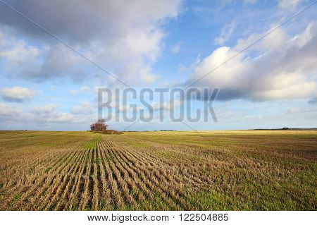 Autumn harvest status of agricultural crops. Seed fields. Rural landscape. Landscape planting on the field. A wide cut wheat field to the horizon. Harvested grain field. Agriculture and farming.