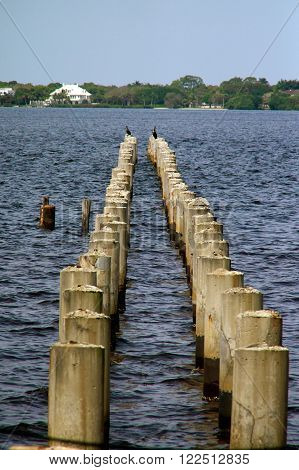 Looking out towards an abandoned boat dock where only the concrete pylons still exist two rows with diminishing perspective with a cormorant bird at the end of each row.