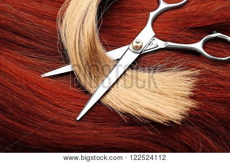 Hairdresser's scissors with varicolored strands of hair, close up