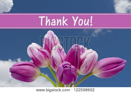 Thank You Message Some tulips with blue sky and text Thank You