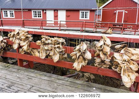norway old fishing hut with stockfish in a haven in