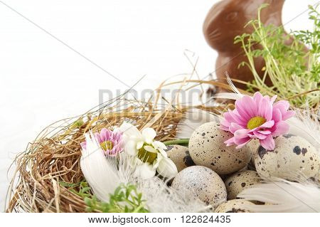 Easter Quail Eggs In The Nest With Flowers On White
