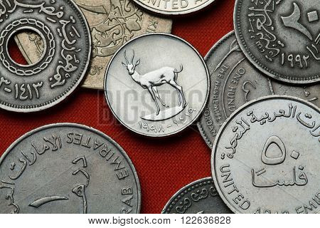 Coins of the United Arab Emirates. Sand Gazelle (Gazella subgutturosa marica) depicted in the UAE 25 fils coin.