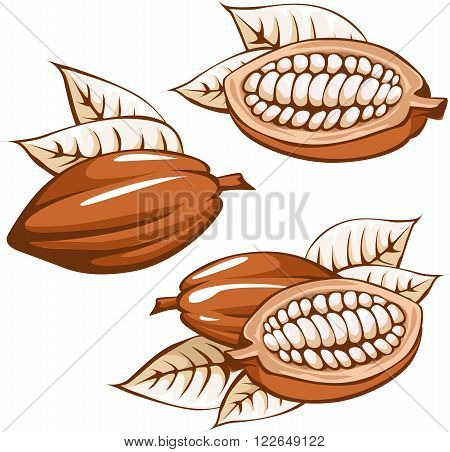 brown cocoa bean - vector illustration on white