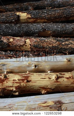 Logs in various stages of having their bark removed