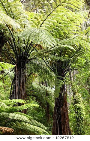 Fern in New Zealand