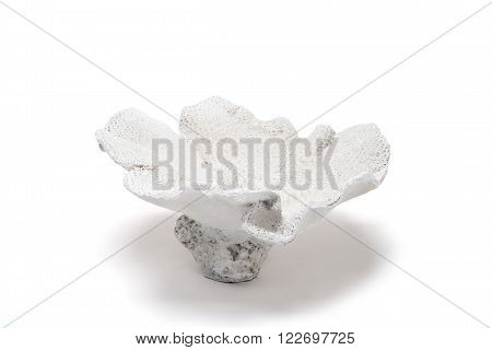White Flower-shaped Coral Trinket On A White Background