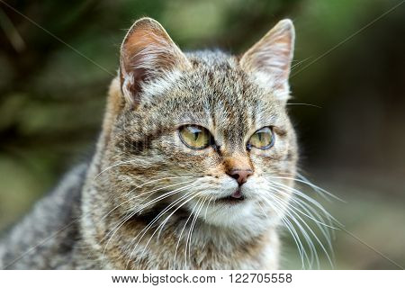 Close Up Cat Portrait