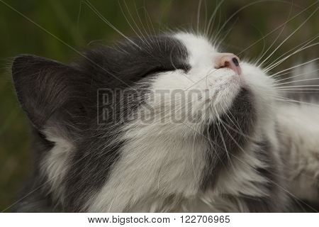 a cat who is enjoying the warmth of the sun