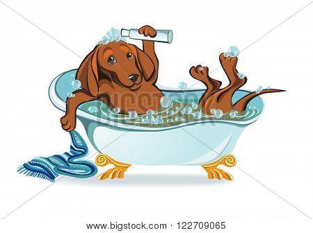dog bathing, dachshund lying in the bath with bubbles