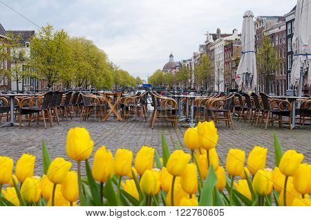 Amsterdam cityscape with tulips on the foreground and outside cafe on the background Holland.
