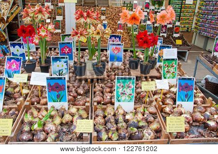 AMSTERDAM-APRIL 28: Shop offers plenty houseplant's bulbs on the Amsterdam Flower Market on April 282015 the Netherlands.The Flower market is one of Amsterdam most colourful attractions.