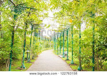 Beauitful walkway of jatujak park in the evening bangkok thailand.