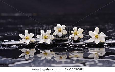 Set of five gardenia on black pebbles