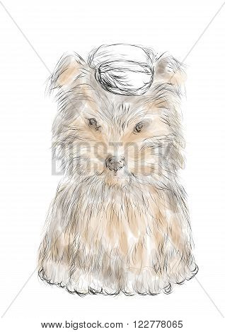 male teacup yorkie isolated on a white background