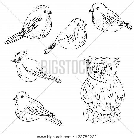 vector hand drawn birds, isolated songbirds and owl, hand drawn vector elements