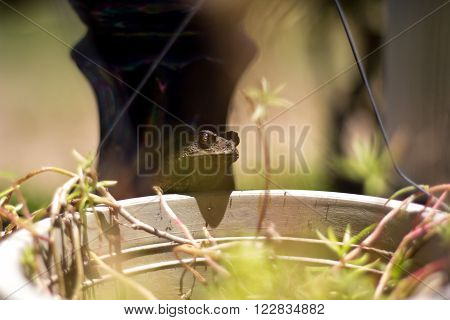 Green frog sitting in the white floral pot