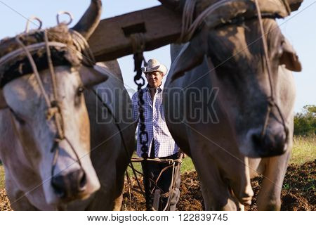 Farming and cultivations in Latin America. Middle aged hispanic farmer manually ploughing the soil with ox at the beginning of the growing season.