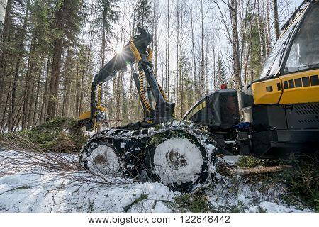 Forestry work. Image of modern log loader cuts spruce