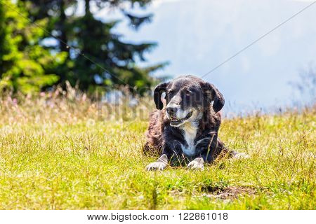 portratit of dog lying on grass, close up