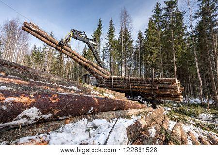 Image of logger loads harvested trunks in winter forest