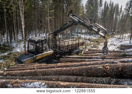 Woodworking in forest. Logger loads harvested trunks