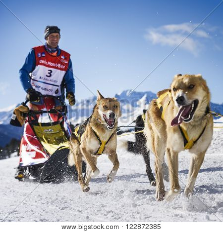 SARDIERES VANOISE, FRANCE - JANUARY 20 2016 - the GRANDE ODYSSEE the hardest mushers race in savoie Mont-Blanc, Daniel JUILLAGUET, sweeden musher, Vanoise, Alps