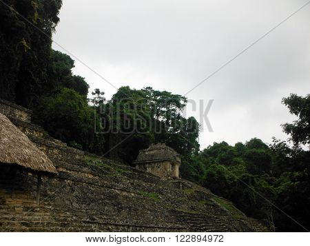 Dense jungle hanging over some Mayan pyramids of the Palenque archeological site in Chiapas Mexico.