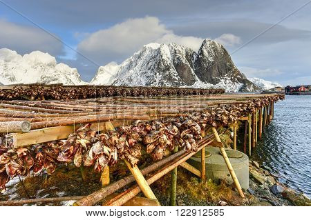 Stockfish - Reine, Lofoten Islands, Norway