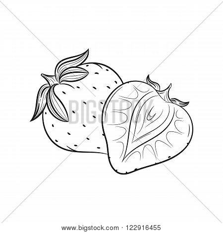 Strawberry. Vector hand drawn sketches vector illustration on white background - stock vector