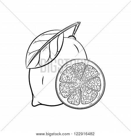 Lemon. Vector hand drawn lemon illustration isolated on white background - stock vector