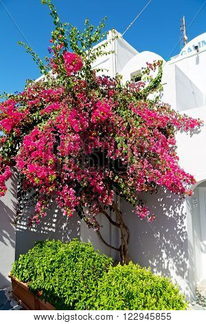 Flowers  In Architecture    Old Town White And