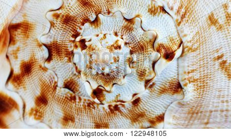 Close up of a spiral and curly shell texture
