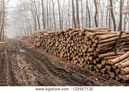Big pile of wood in the forest